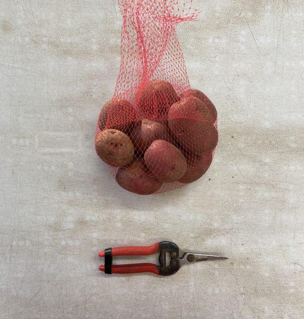 2lb red potato