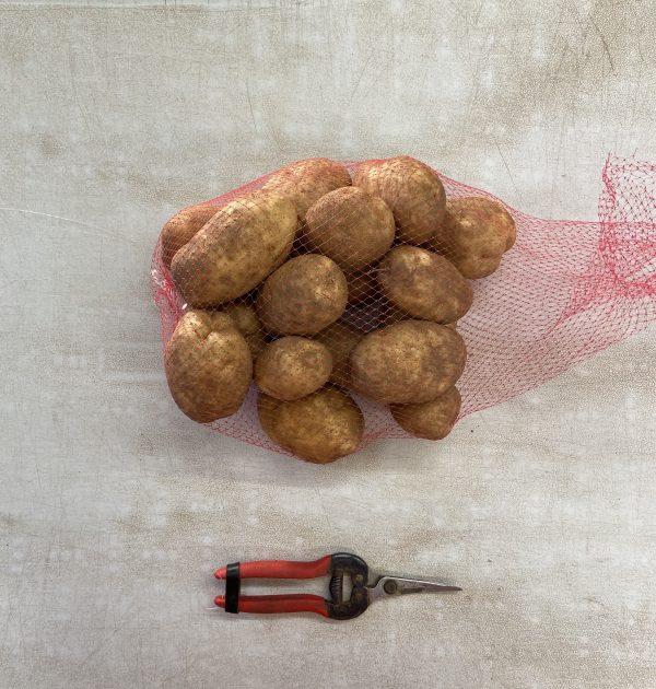 5lb gold potato